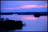 Mangroves shore on cloudy dawn. The Keys, Florida, USA