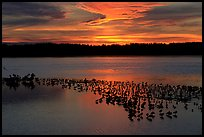 Large pond with birds at sunset under colorful sky, Ding Darling NWR. Florida, USA (color)