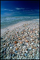 Beach covered with sea shells, mid-day, Sanibel Island. Florida, USA