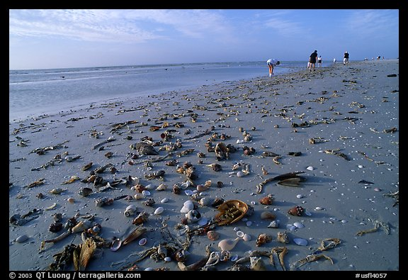 Shells washed-up on shore and beachcombers, Sanibel Island. Florida, USA (color)