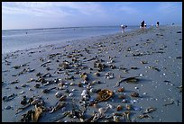 Shells washed-up on shore and beachcombers. Sanibel Island, Florida, USA