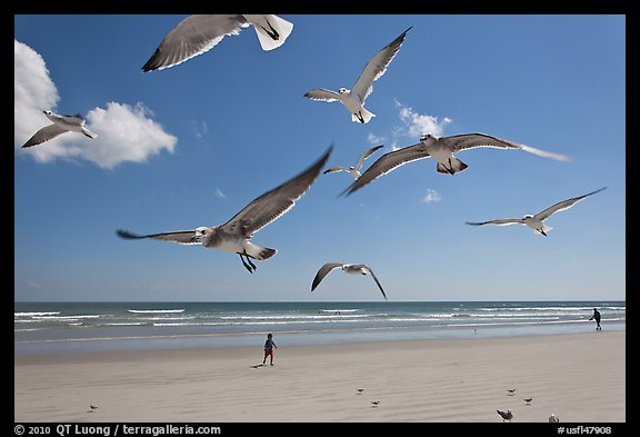 Seagulls and Atlantic beach, Jetty Park. Cape Canaveral, Florida, USA (color)