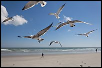 Seagulls and Atlantic beach, Jetty Park. Cape Canaveral, Florida, USA ( color)