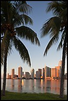 Palm trees and Miami skyline at sunrise. Florida, USA (color)