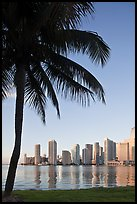 Palm tree and downtown skyline, Miami. Florida, USA (color)