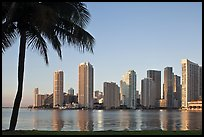 Miami downtown skyline and palm tree. Florida, USA (color)