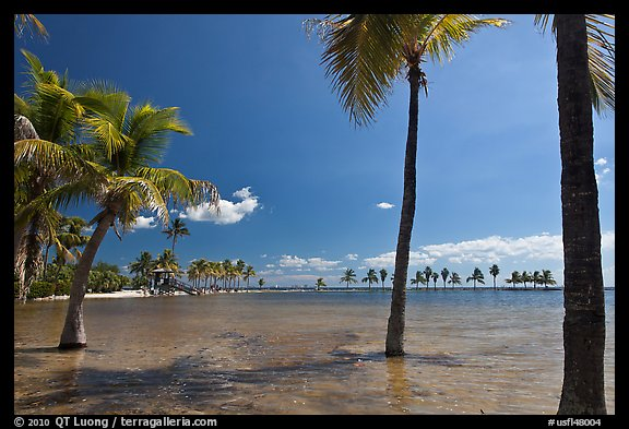 Palm trees during tidal flood,  Matheson Hammock Park, Coral Gables. Florida, USA (color)