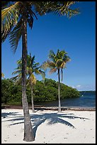 Palm trees and beach, John Pennekamp Reef State Park, Key Largo. The Keys, Florida, USA (color)