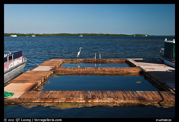 Deck and Heron, Sugarloaf Key. The Keys, Florida, USA (color)