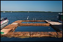Deck and Heron, Sugarloaf Key. The Keys, Florida, USA ( color)