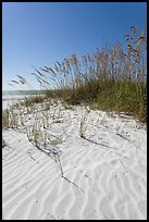 Grasses and white sand ripples on beach, Fort De Soto Park. Florida, USA (color)
