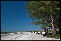 White sand beach and ironwood trees, Fort De Soto Park. Florida, USA ( color)