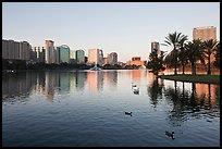 City skyline with row of palm trees at sunrise, Sumerlin Park. Orlando, Florida, USA (color)