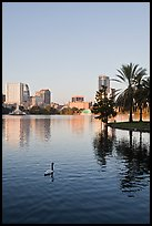 Swan, palm trees, and skyline, lake Eola. Orlando, Florida, USA (color)