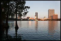 Bald Cypress and skyline, Lake Eola. Orlando, Florida, USA