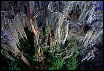 Spanish moss, Okefenokee Swamp. Georgia, USA (color)