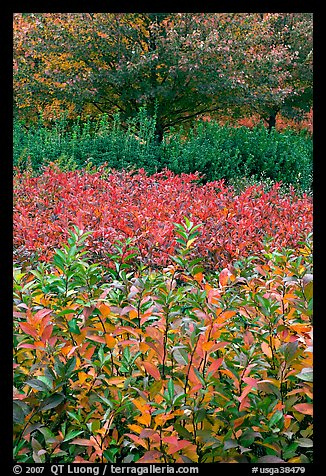 Shrubs and trees in fall colors. Atlanta, Georgia, USA (color)