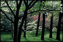 White and pink trees in bloom, Bernheim arboretum. Kentucky, USA ( color)