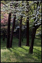 White and pink trees in bloom, Bernheim arboretum. Kentucky, USA