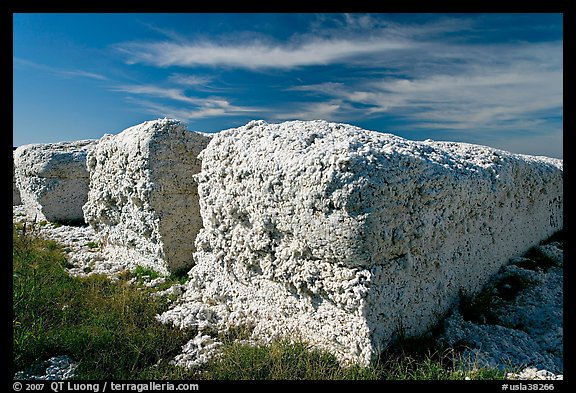 Cotton modules. Louisiana, USA