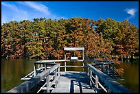 Boardwalk and cypress,  Lake Providence. Louisiana, USA