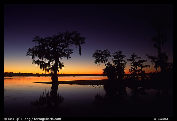 Picture Photo Bald Cypress At Sunset On Lake Martin