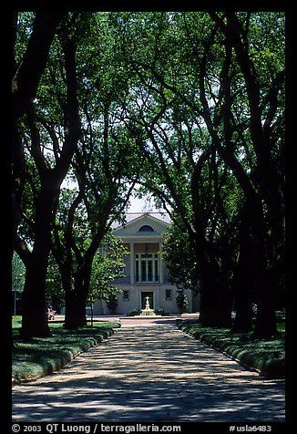 Tree alley leading to a Plantation house. Louisiana, USA