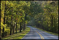 Roadway in forest. Natchez Trace Parkway, Mississippi, USA