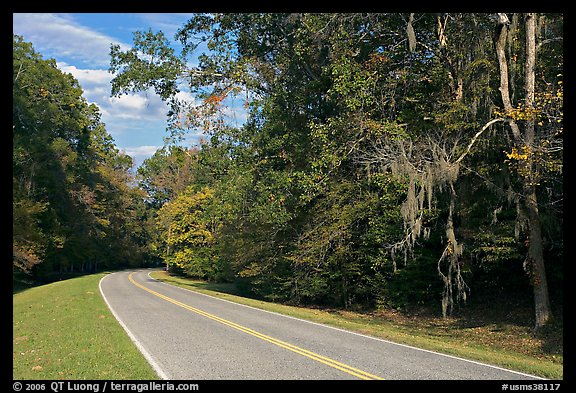 Road curve bordered by tree with Spanish Moss. Natchez Trace Parkway, Mississippi, USA (color)