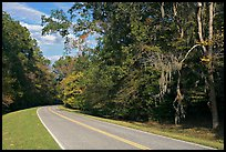 Road curve bordered by tree with Spanish Moss. Natchez Trace Parkway, Mississippi, USA