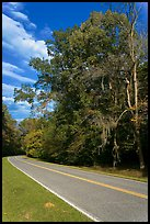 Road turn with trees and Spanish Moss. Natchez Trace Parkway, Mississippi, USA