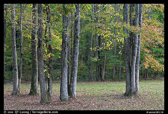 Trees in fall. Natchez Trace Parkway, Mississippi, USA (color)
