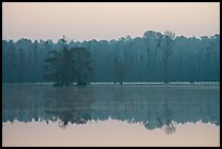 Lake with cypress and dawn. South Carolina, USA