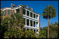 Antebellum house and palm tree. Charleston, South Carolina, USA