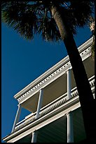 Palm tree and facade with columns, looking upwards. Charleston, South Carolina, USA