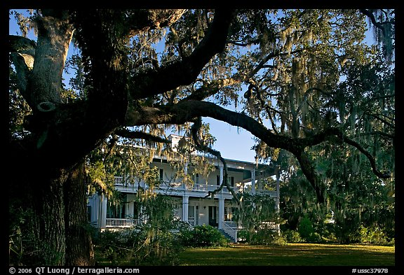 Huge live oak tree and house. Beaufort, South Carolina, USA