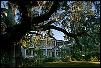 Huge live oak tree and house. Beaufort, South Carolina, USA ( color)