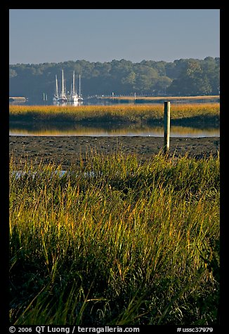 Grasses and yachts in Beaufort bay, early morning. Beaufort, South Carolina, USA (color)