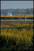 Grasses and yachts in Beaufort bay, early morning. Beaufort, South Carolina, USA