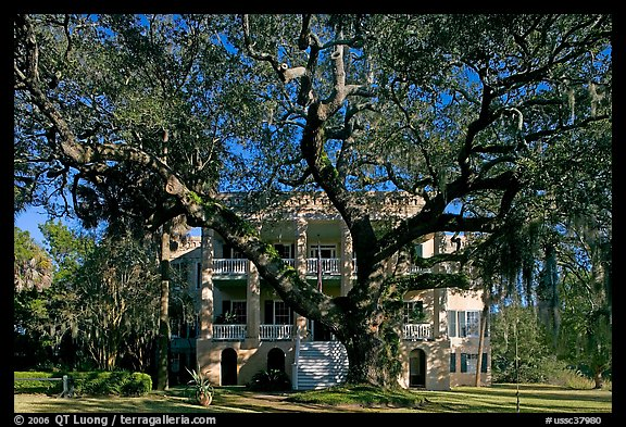 Live oak tree and brick house known as the Castle. Beaufort, South Carolina, USA