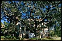 Live oak tree and brick house known as the Castle. Beaufort, South Carolina, USA ( color)