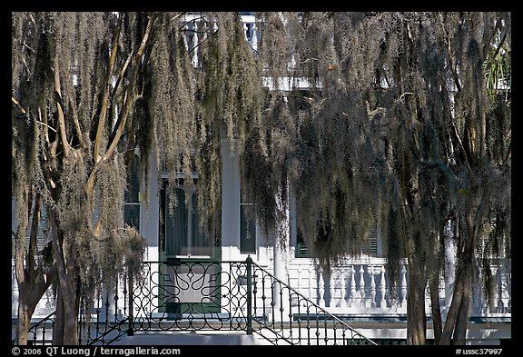 Spanish moss and house. Beaufort, South Carolina, USA