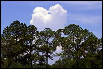 Trees and cloud, Hilton Head. South Carolina, USA ( color)