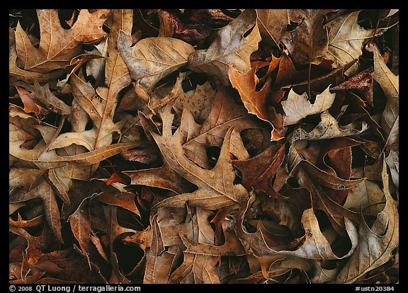 Fallen leaves close-up. USA (color)