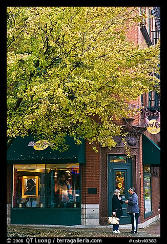 Tree in fall foliage and brick building. Nashville, Tennessee, USA