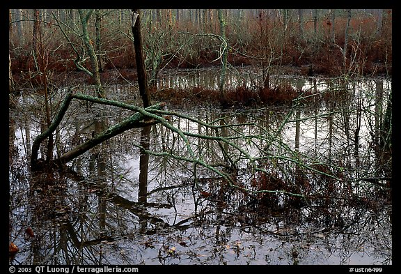 Swamp reflections. Tennessee, USA (color)
