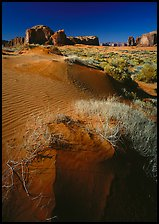 Grasses and sand dunes. Monument Valley Tribal Park, Navajo Nation, Arizona and Utah, USA ( color)