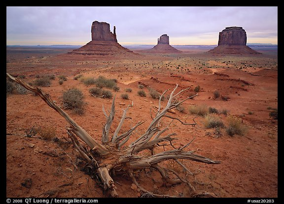 Roots, red earth, and Mittens. Monument Valley Tribal Park, Navajo Nation, Arizona and Utah, USA (color)