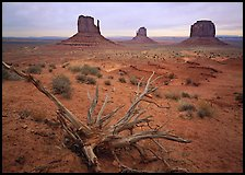Roots, red earth, and Mittens. Monument Valley Tribal Park, Navajo Nation, Arizona and Utah, USA