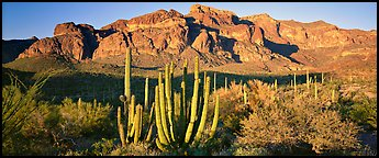 Scenery with organ pipe cactus and desert mountains. Organ Pipe Cactus  National Monument, Arizona, USA (Panoramic color)